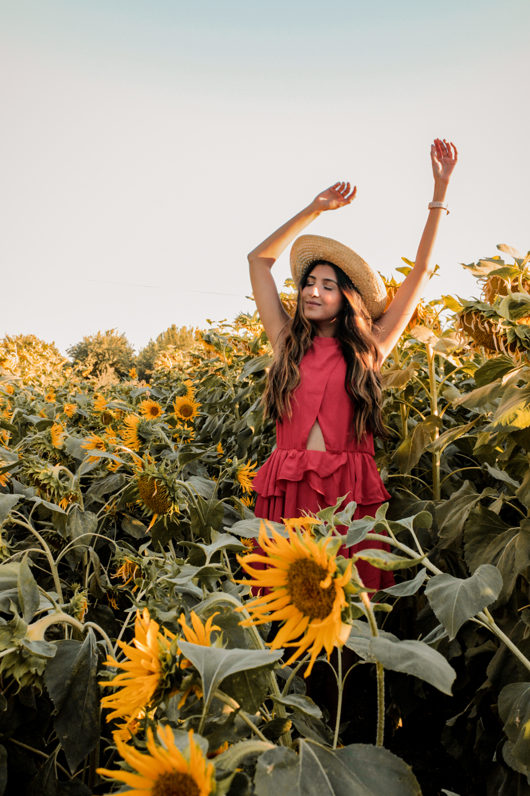sunflower-fields-dixon-california-blogger 1
