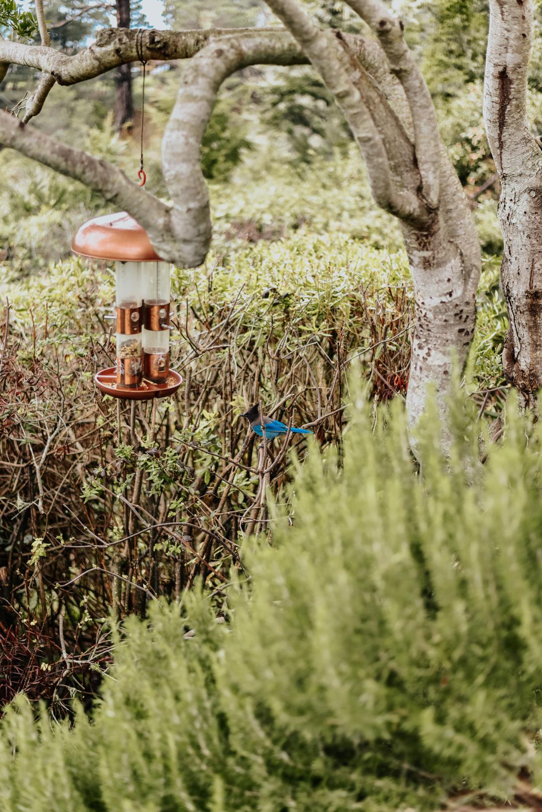 brewery-gulch-inn-mendocino-staycation-garden 8