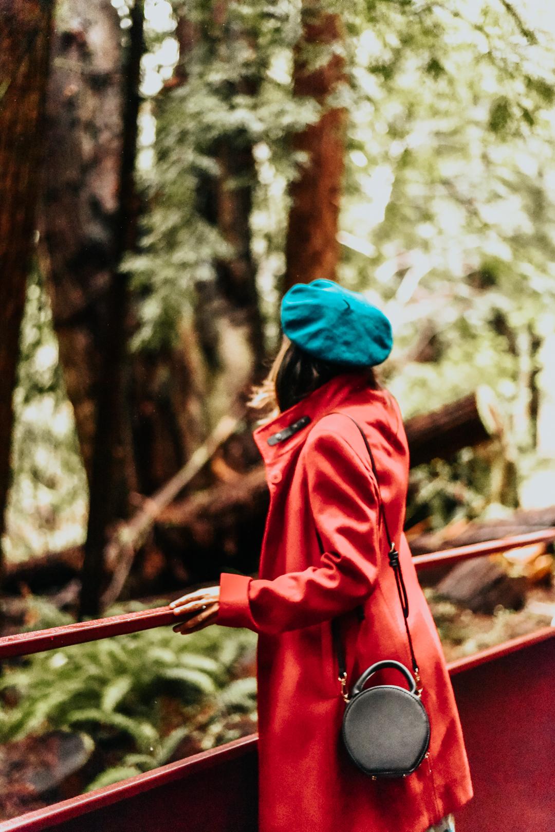 mendocino-redwoods-skunk-train-blogger 14