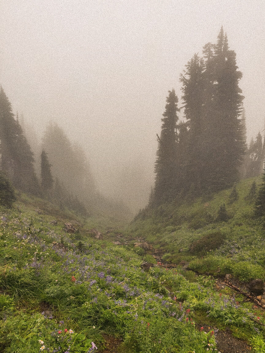 mount-rainier-national-park-blogger 24