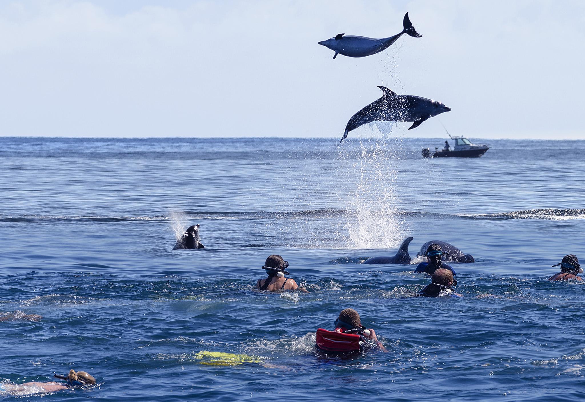 Dolphin Eco Experience 5.jpg
