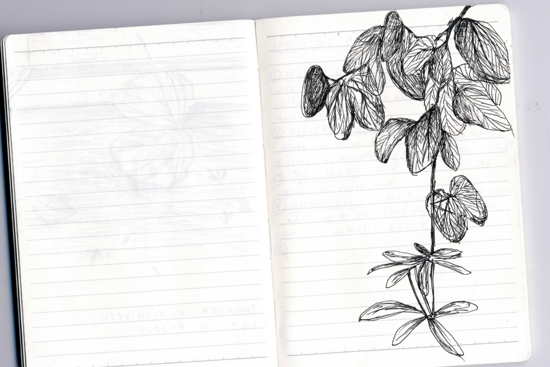 India_Sketches16.jpg