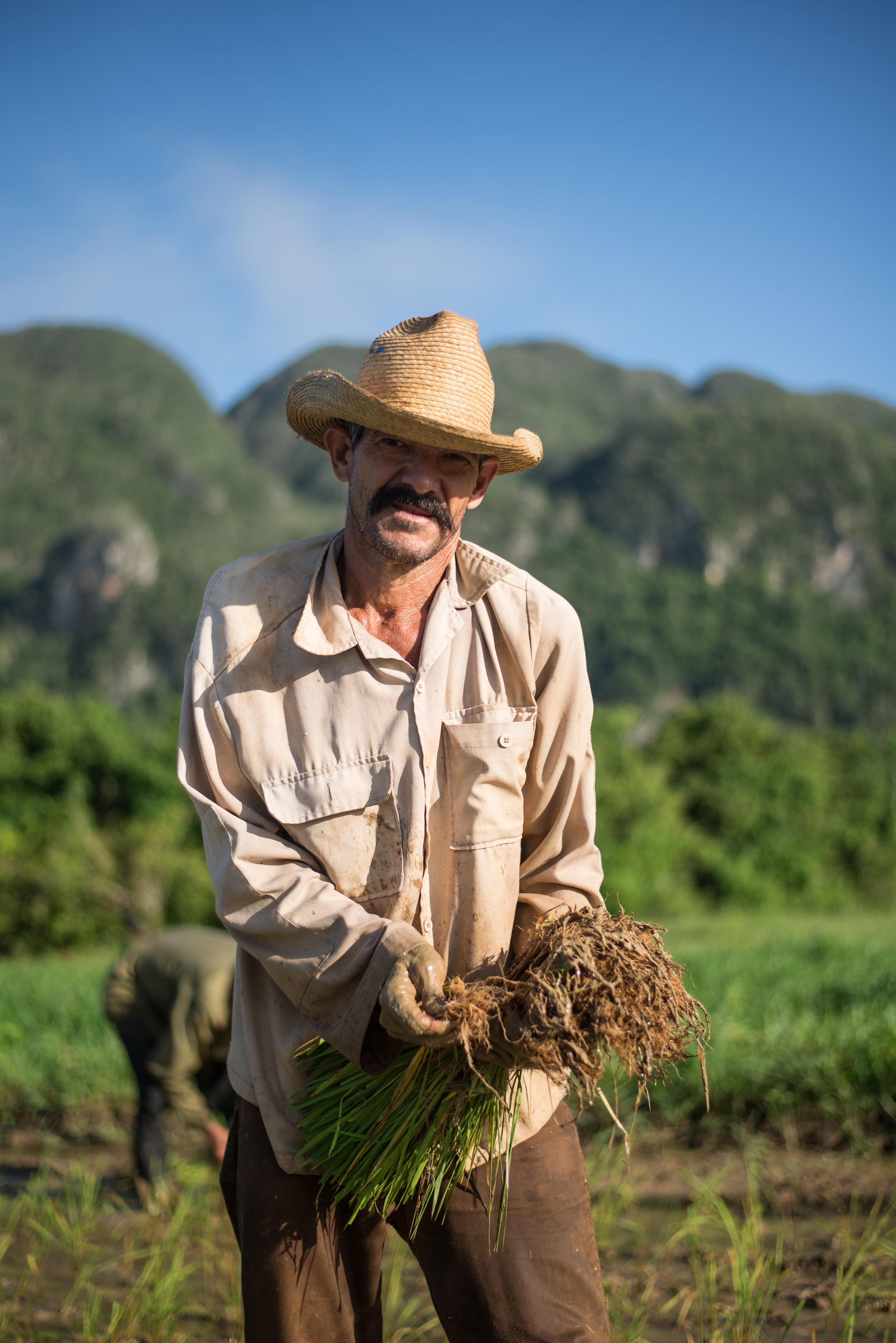The Rice Paddies, Cuba, 2017