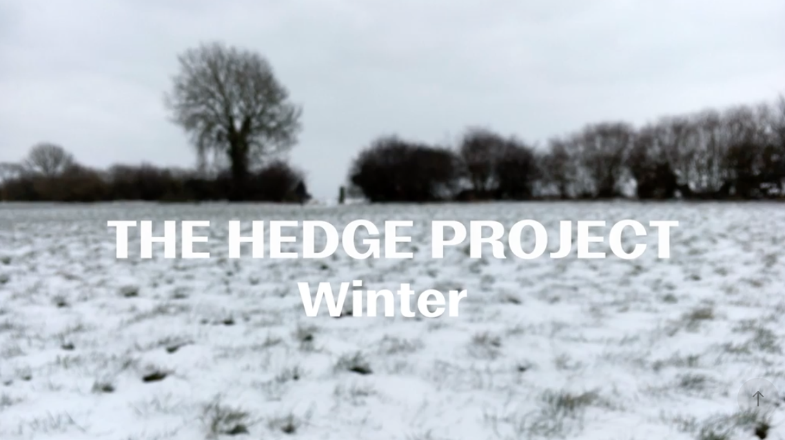 The Hedge Project Winter.png