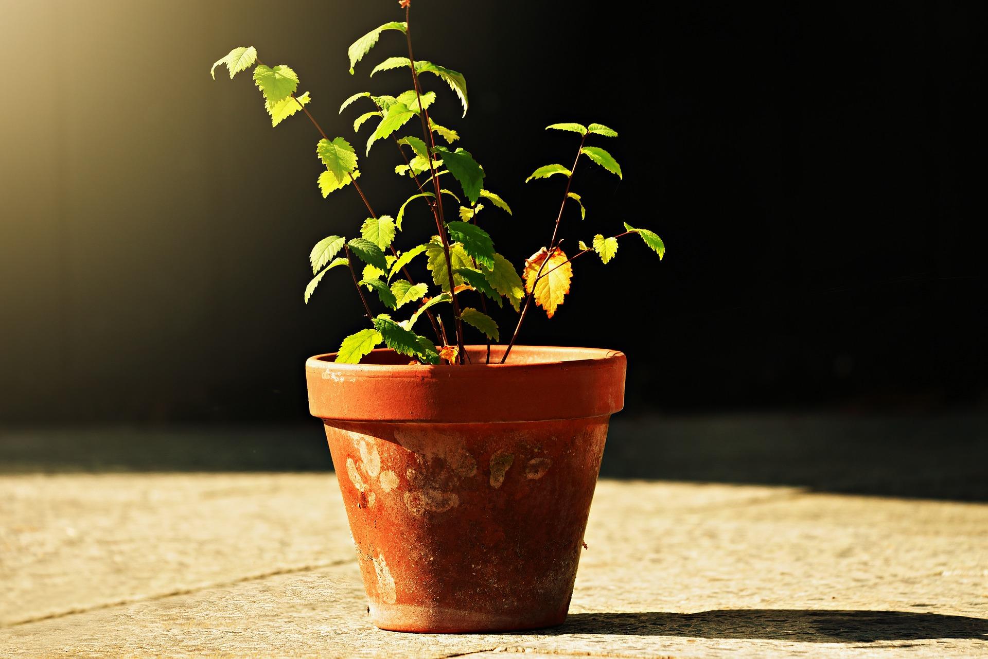 flower-pot-3646013_1920.jpg