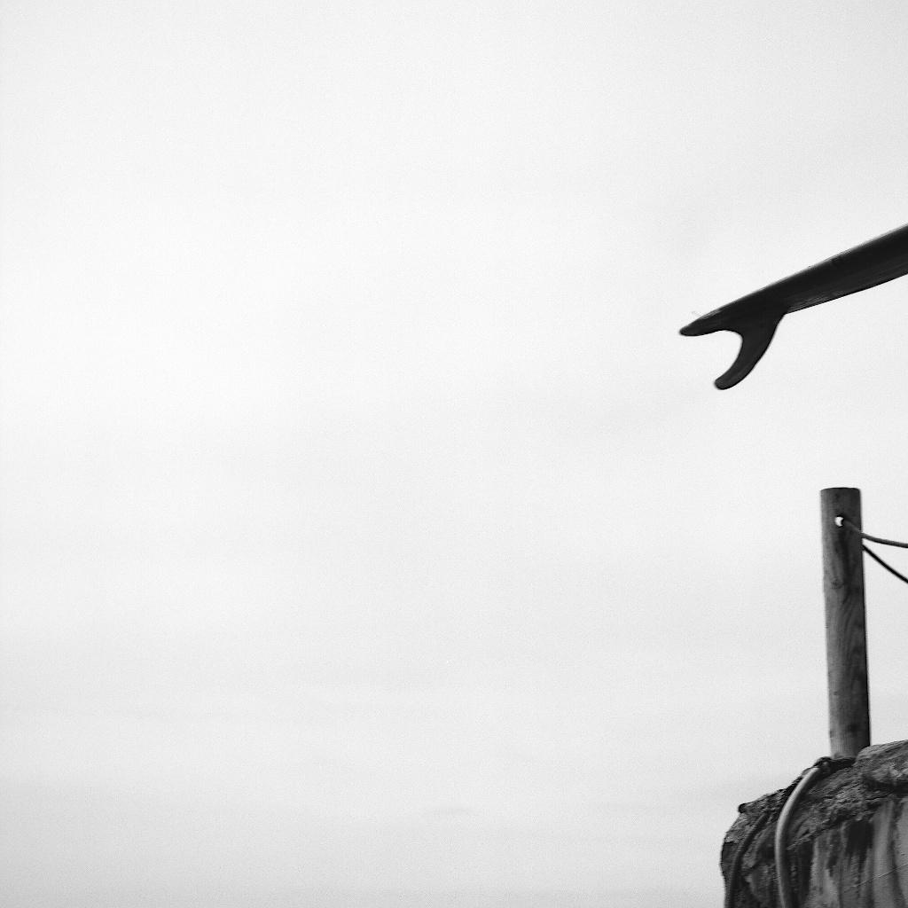 [#015109] Half the log, half the story, Santa Cruz, USA, 2011