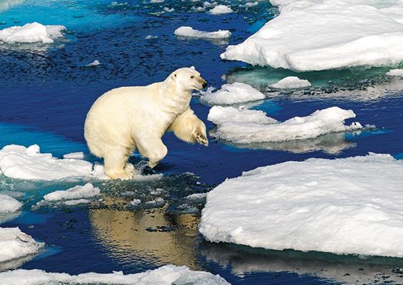Polar Bear in Norway.