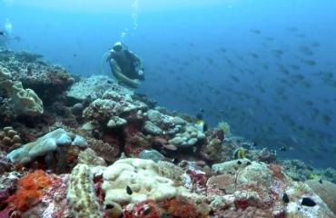 Zipolo Habu Resort - Solomon Islands