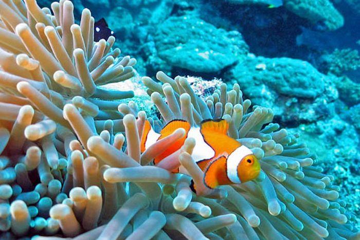 Anemonefish-52-700-550-80.jpg
