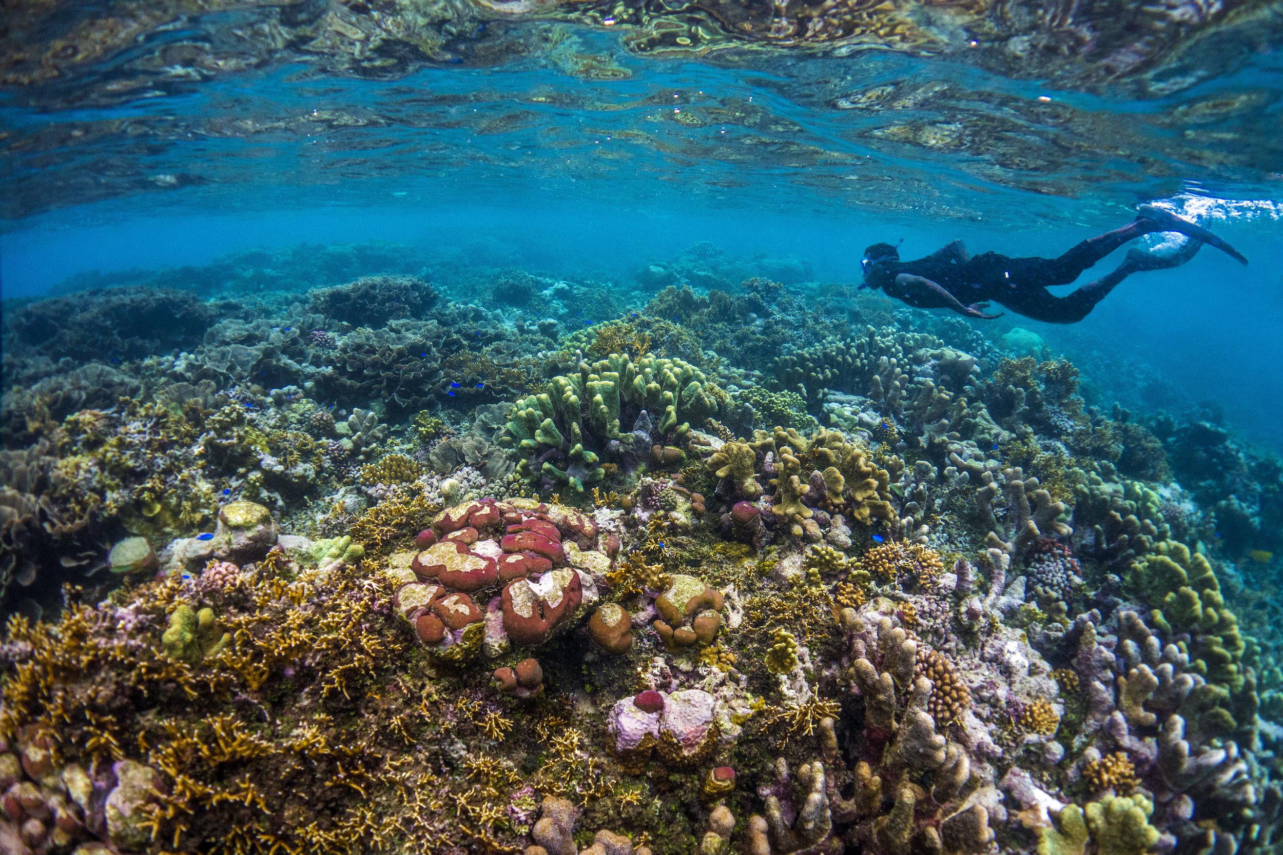 SIVB_0006_DK_2016 - Snorkeling at Marau Sound.jpg