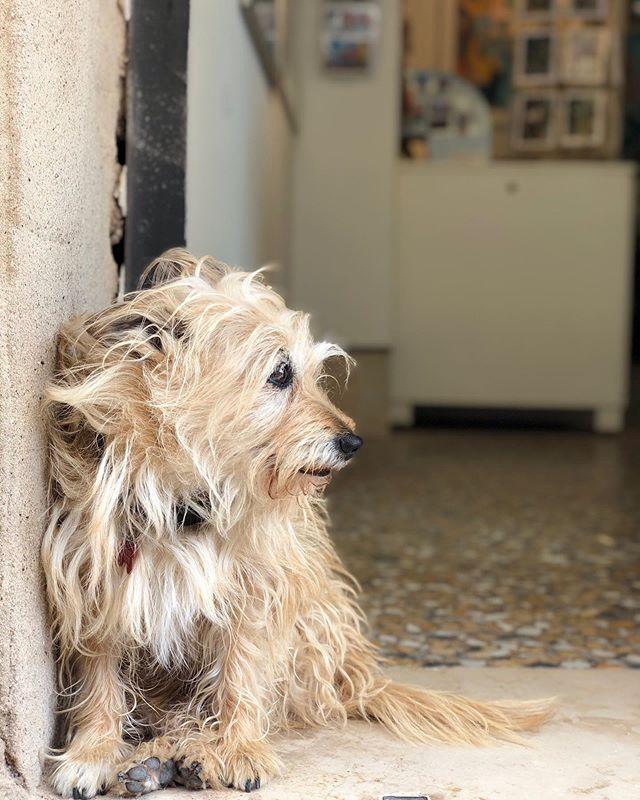 Buongiorno, carino.  #gallerydogs #gallerista #dogswholoveart