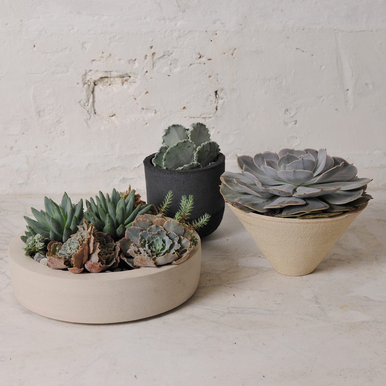 A selection of planted mini grandees. Made in collaboration with ceramic artist Mirka Golden-Hann.