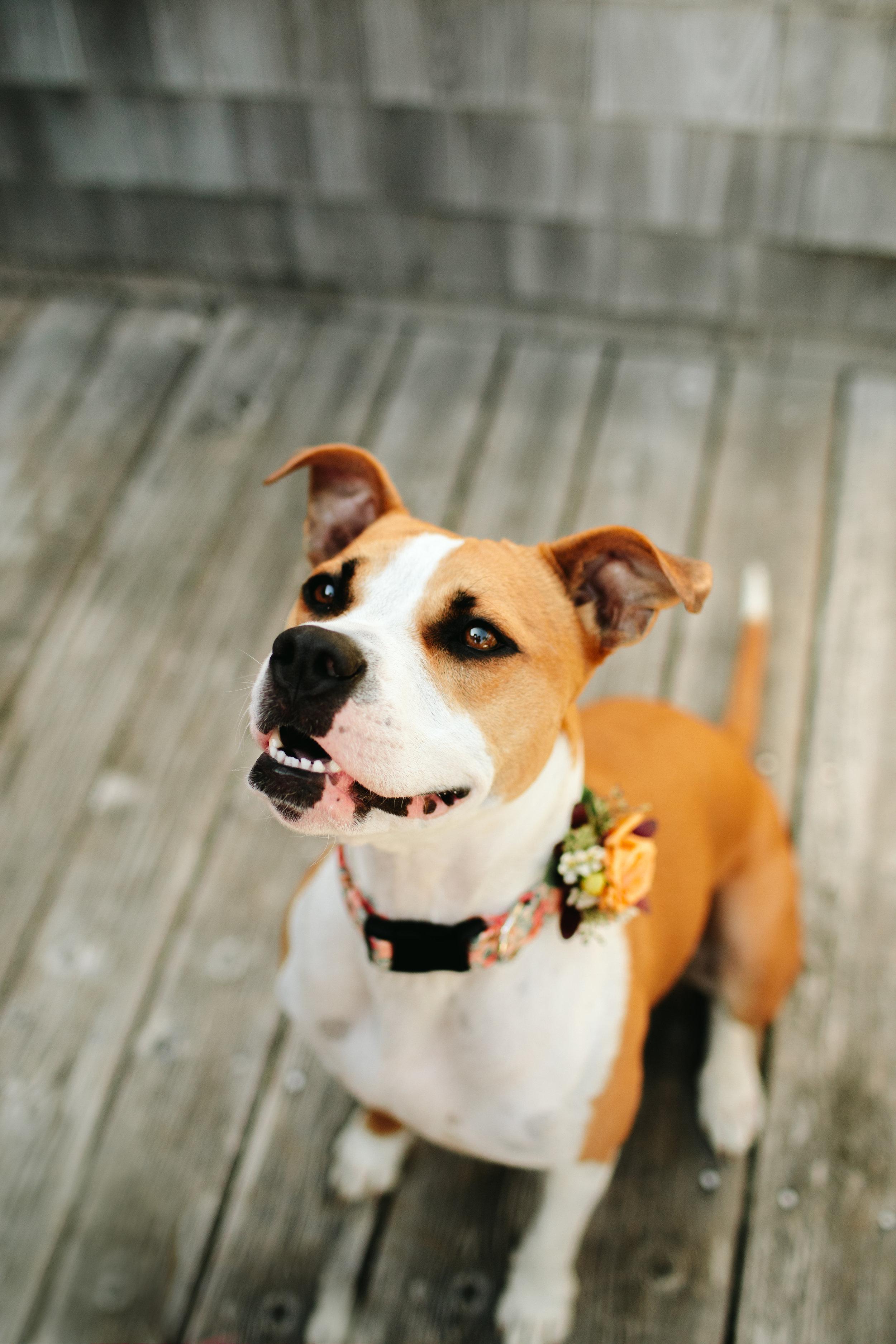 maine-dog-friendly-wedding