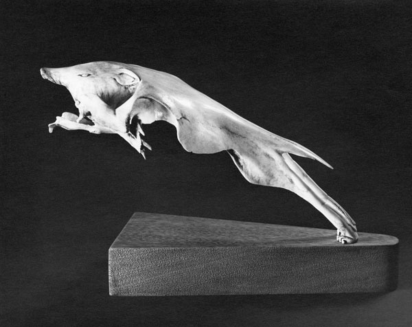 The Hound of Hell (Wolf/Dog) - Bone Sculpture by Jerry Hardin