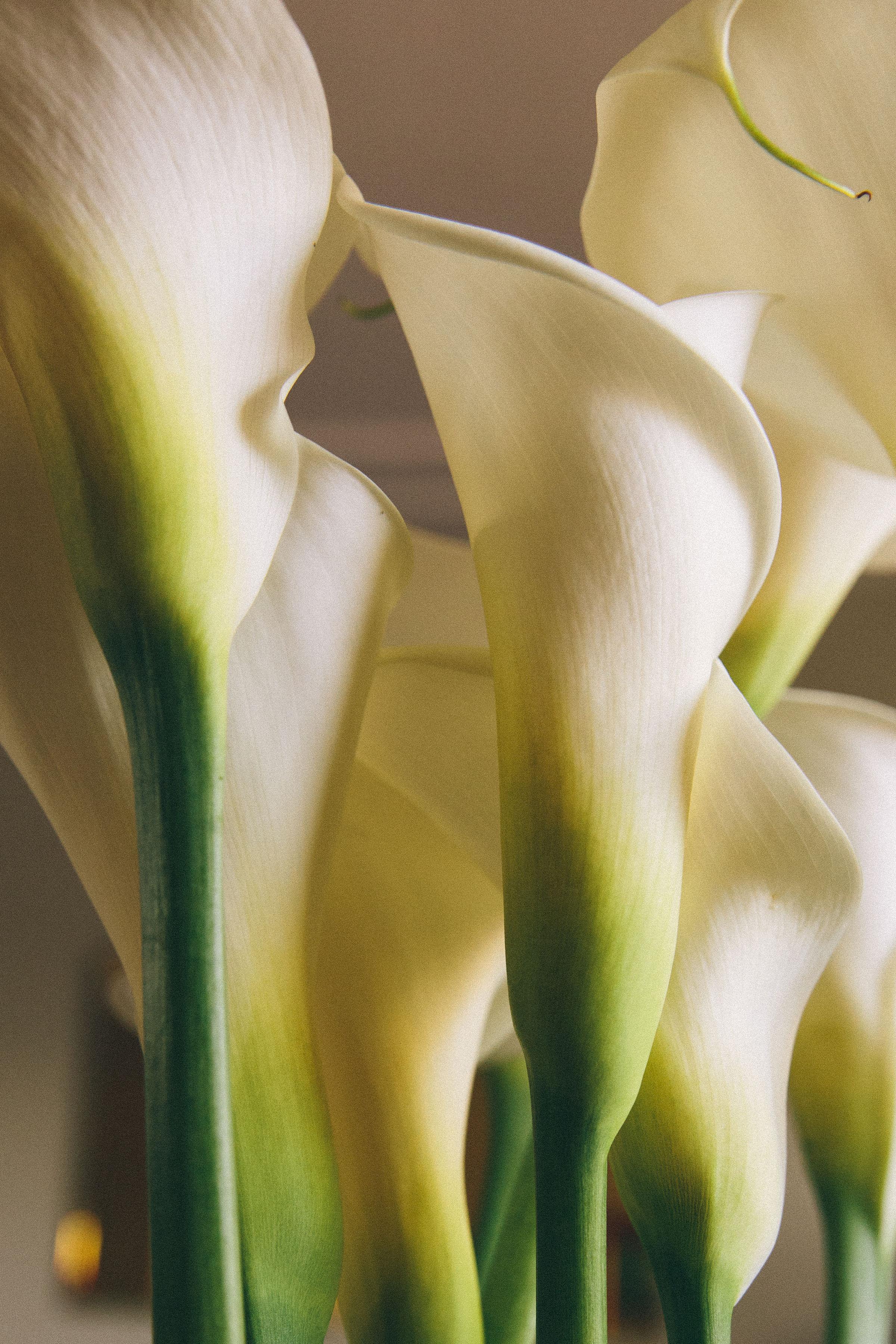 ellice ruiz_sustainable workwear_calla lillies.jpg