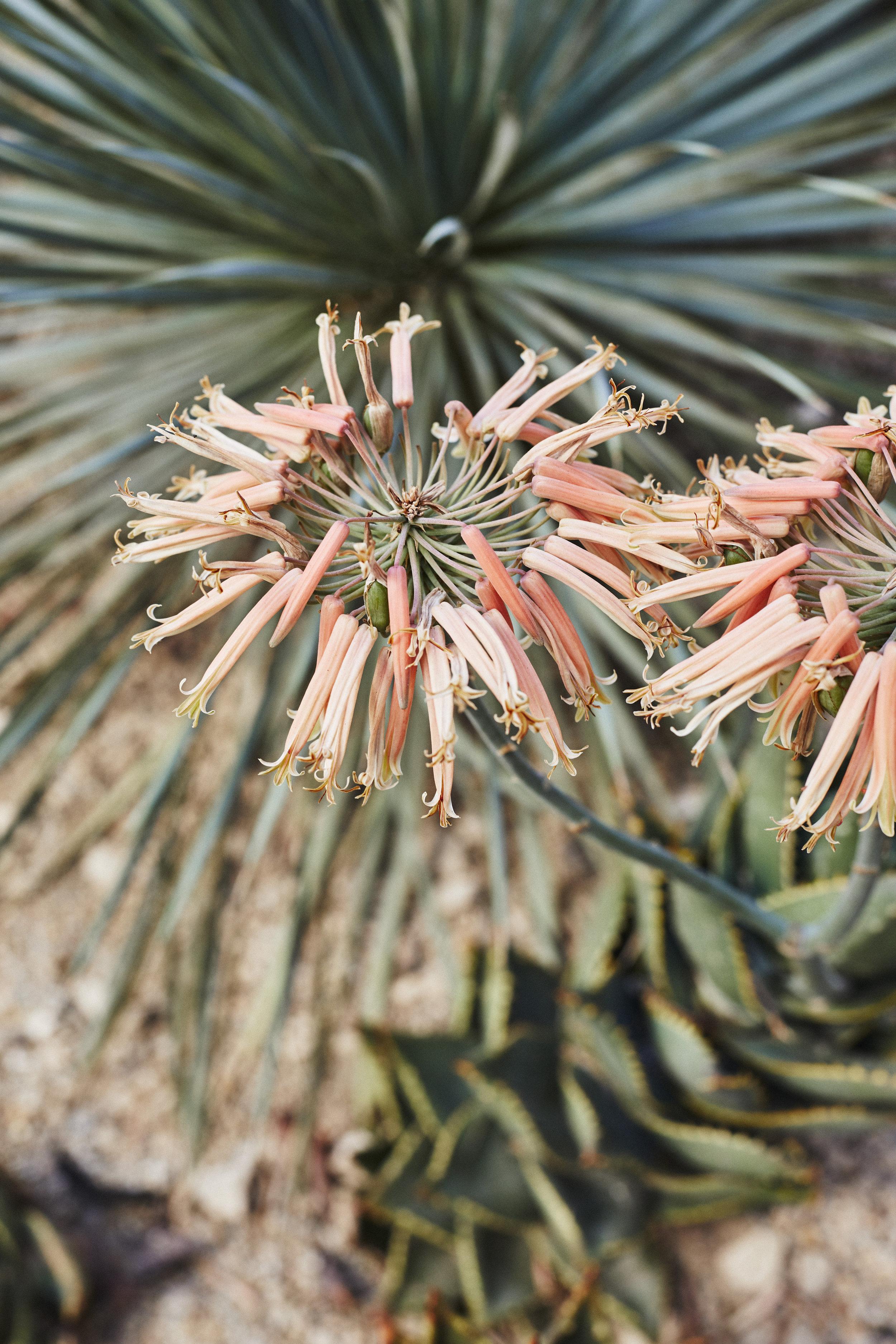 El_Centro_Cactus_Garden_SHOT_06_008.jpg