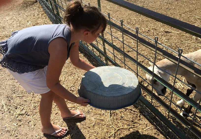 Elle feeding a goat. She was scared it would bite her so she put the food on a pan she found.