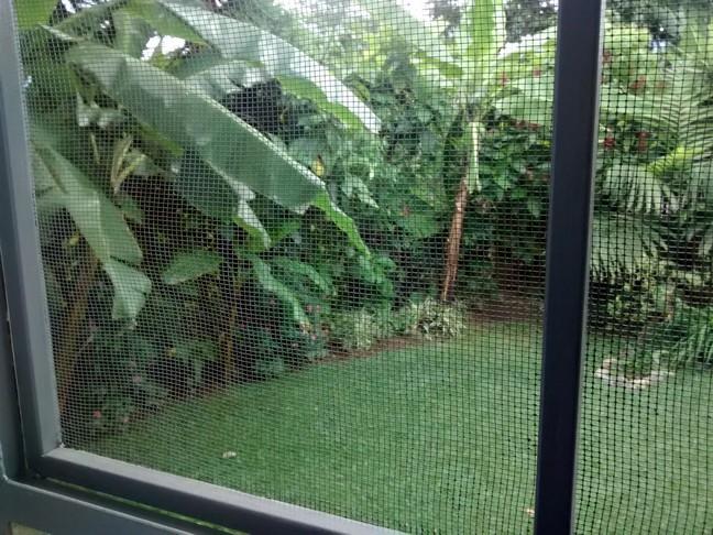 Screened windows