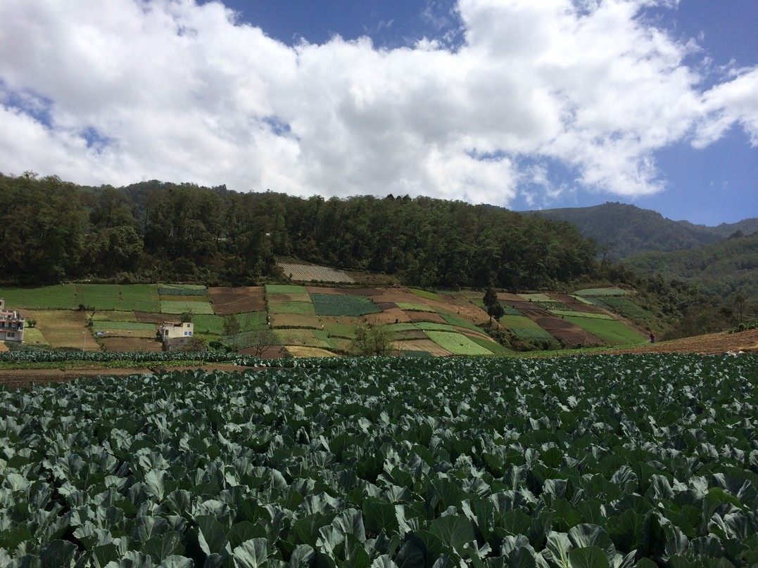 Farmlands carved into the hillside at 7,000 feet