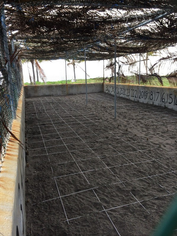 Thisgrid system helps track when the turtles willhatch.