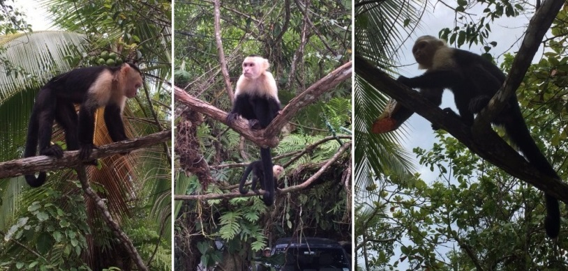 I can't believe I took these pictures! The monkeys were all around and just above our heads. So cool!