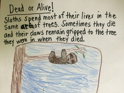 It's possible that the sloth in the tree is not alive.