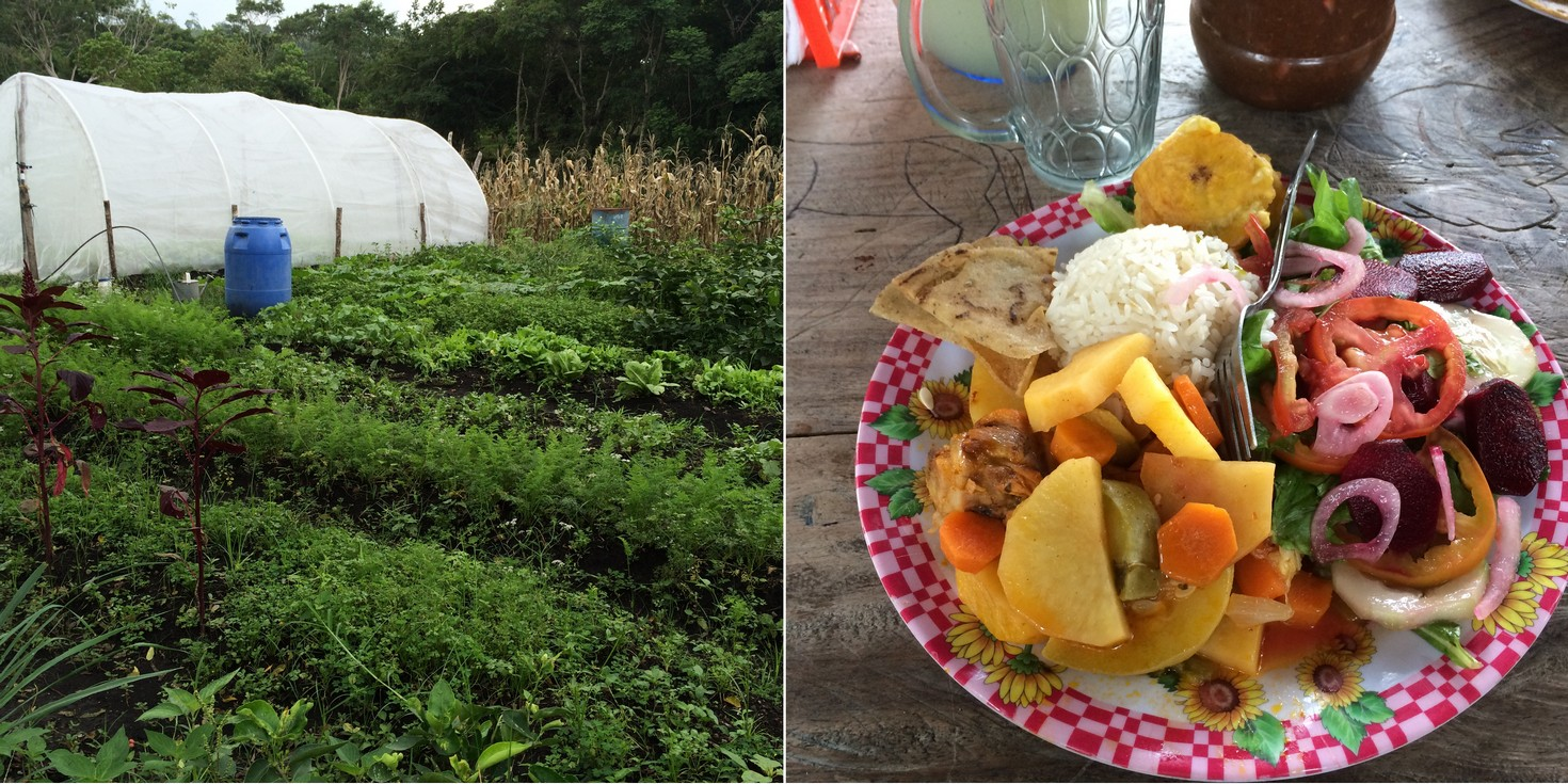 Left: This is Devanira's organic garden. She starts many of her plants in the green house. Right: Every meal included several vegetables and a homemade drink. I believe we paid $2.50-$4 per meal per person. I brought food for our kids since they don't like healthy vegetables.