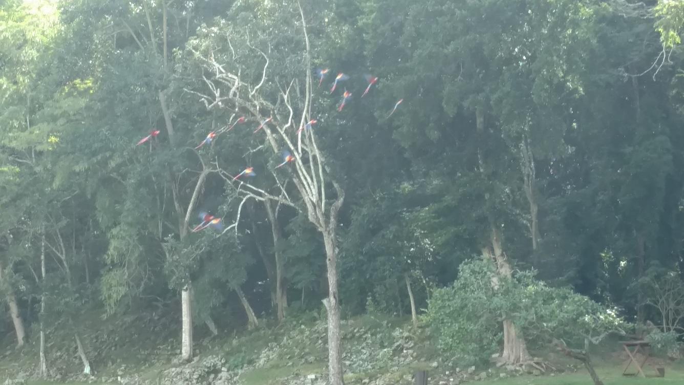 Birds in flight. They were amazing to watch.