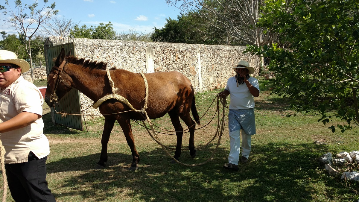 This horse pulled our entire tour group around the plantation via a cart attached to a rail system.