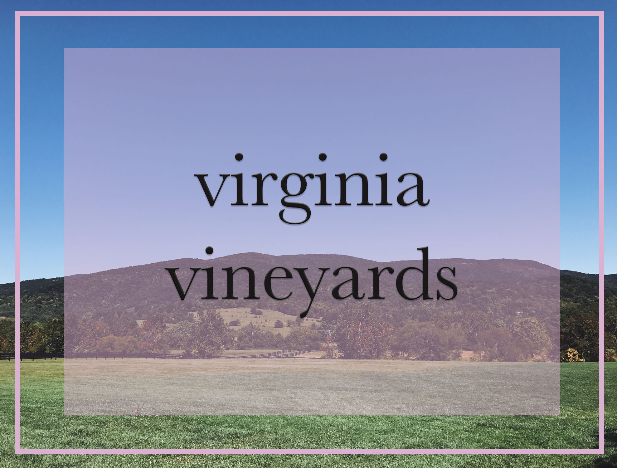 Virginia Vineyards.jpg