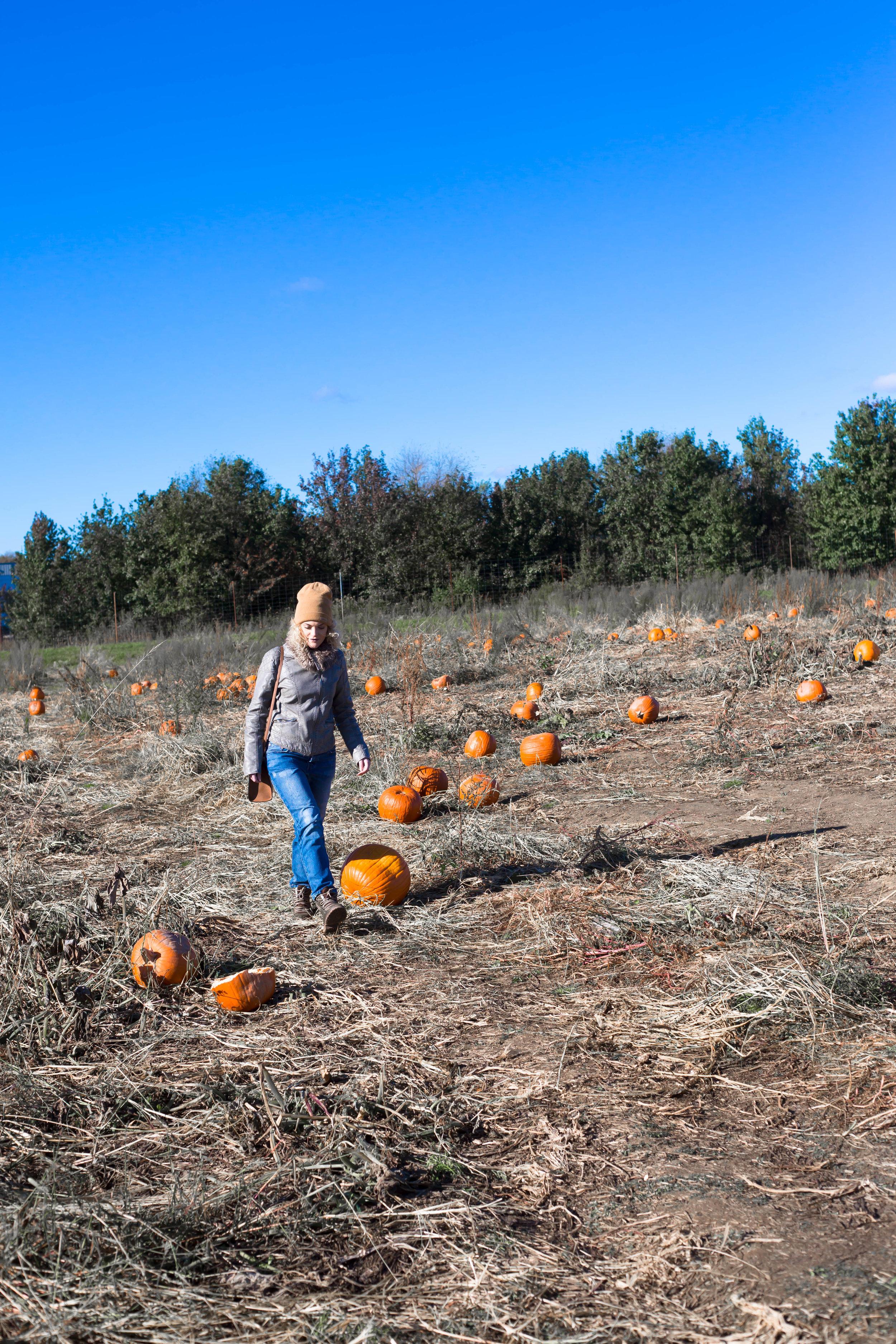 Pumpkin Patch (4 of 26).jpg
