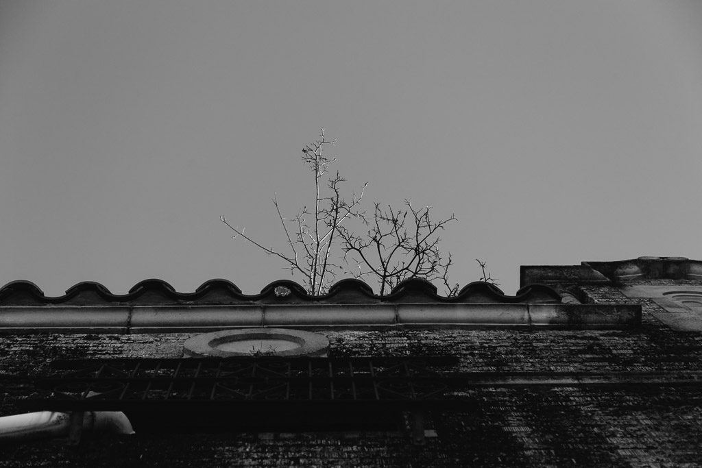 _MG_3512.jpg