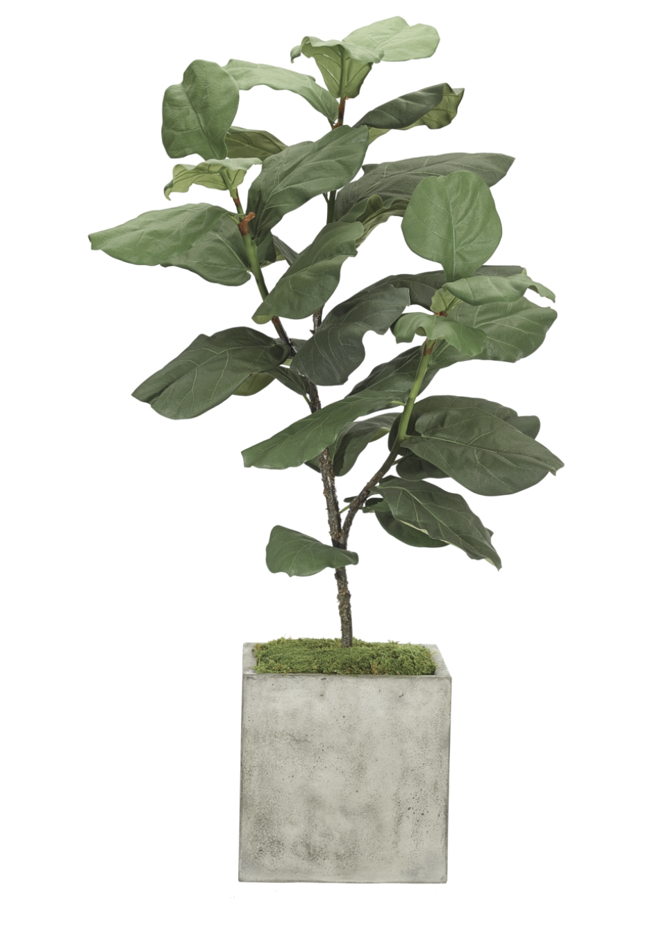 NDI -  Fiddleleaf Plant in Concrete Planter  $290  Available through your designer