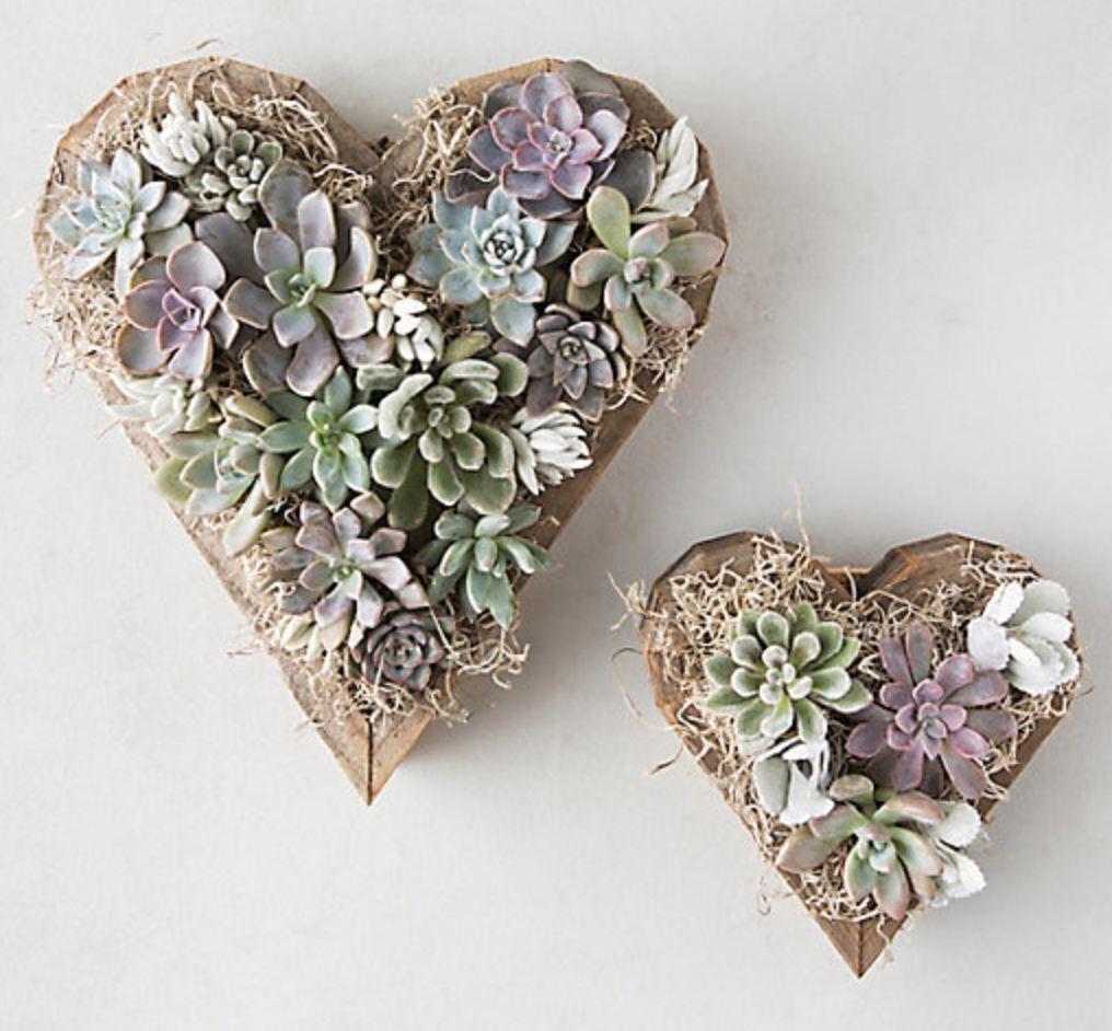 Terrain -  Succulent Sweetheart  planters; Large $148, Small $88