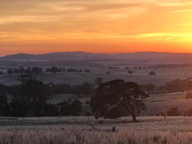 Morning walk & what a sunrise it was 🙌🏼 looks like a good day from the top of the Sidonia hills 💫 #nofilter #Sidonia #sidoniahills #sunrise #victoriancountryside #farmlife #granitecountry #morningview #livingtheseasons #autumnday #thefloralforager
