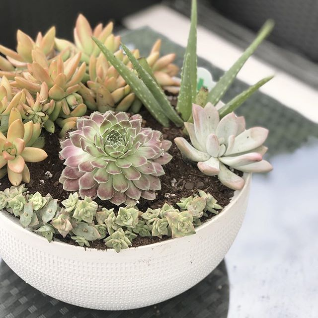 When your hubs knows how much you love succulents, so he hand picks some different varieties so you can make an arrangement for the patio. It's always been a dream of mine to have my back yard and patio be an oasis - where I can read the Bible with my coffee in the cool of the morning, hang with friends and talk about life and dream together, where we can eat and play and share laughs as family. Thank you @joshalltop for loving me the way you do. #eatdrinkandbemerry #backyardvibes #patiolife #oasis #paradise . . . Succulents from @loweshomeimprovement  Ceramic bowl from @target