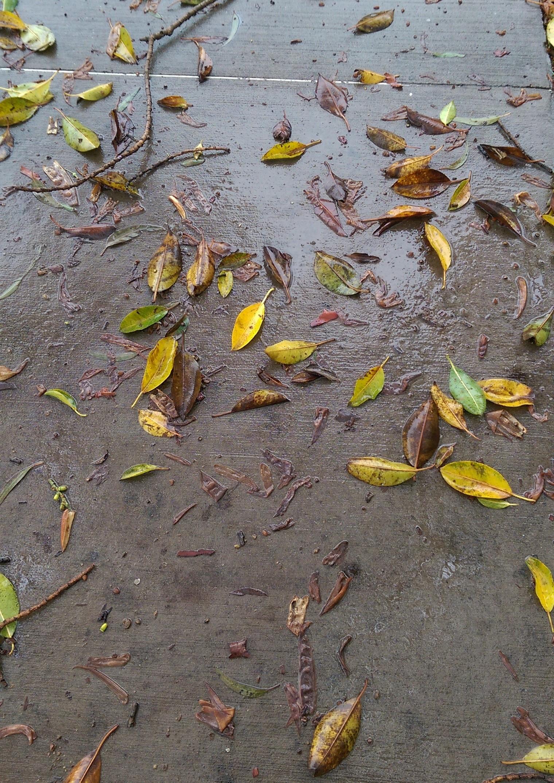 Wet leavesV2.jpg