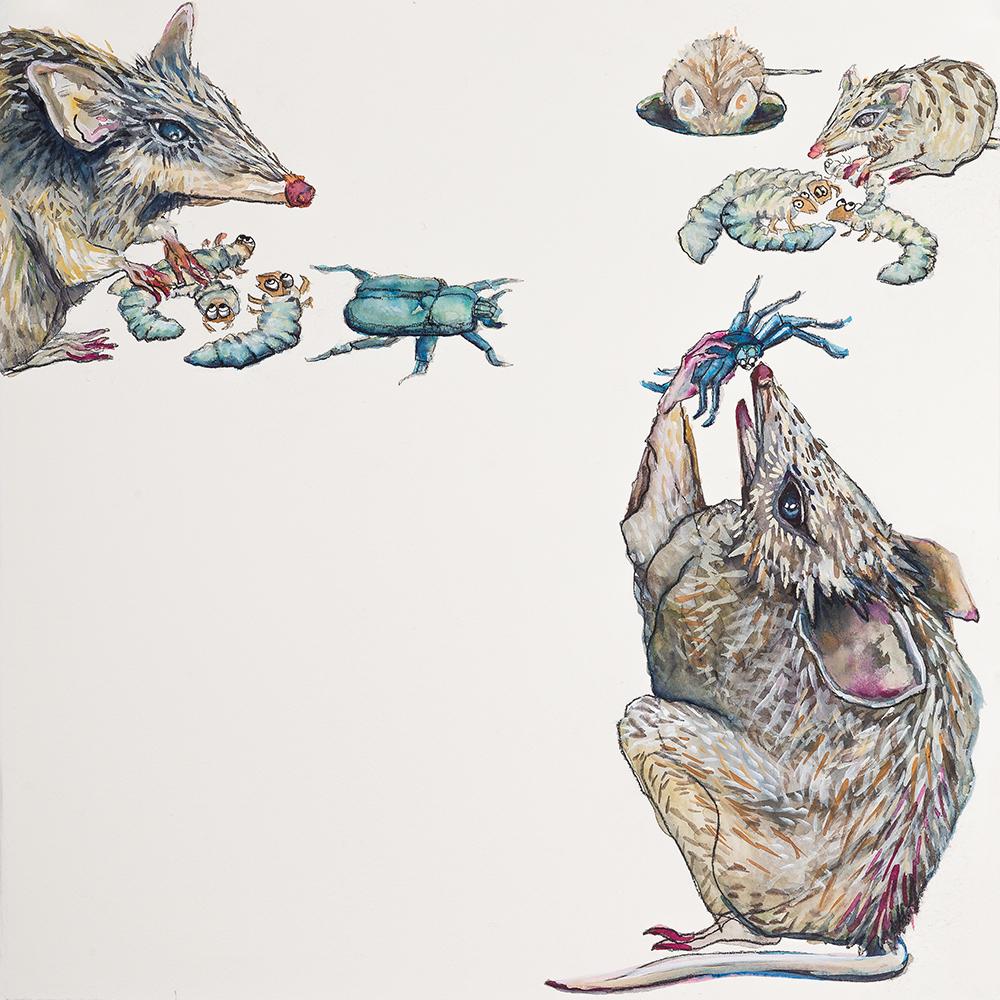'Banquet of Bilbies' (2015) Helen Kocis Edwards