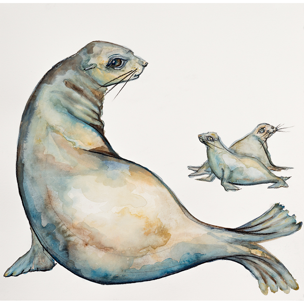 'Harem of Seals' (2015) Helen Kocis Edwards