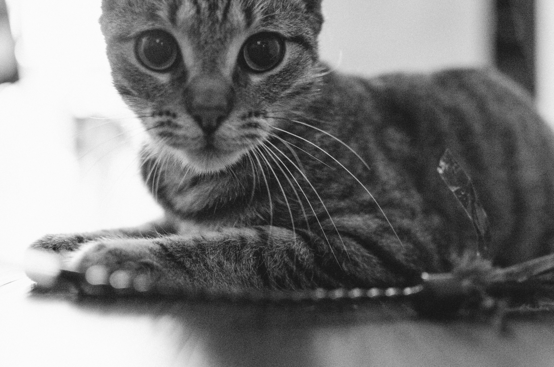 MeowParlour2015_05_15_MM-089.jpg