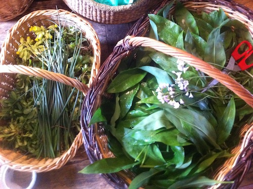 Freshly foraged wild garlic (right) and wild chives (left)