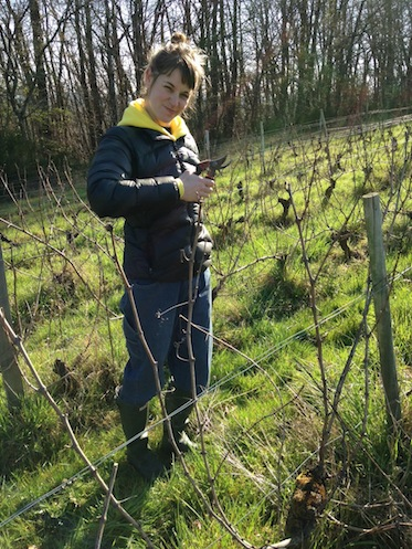 Pruning grapevines in the Loir-et-Cher