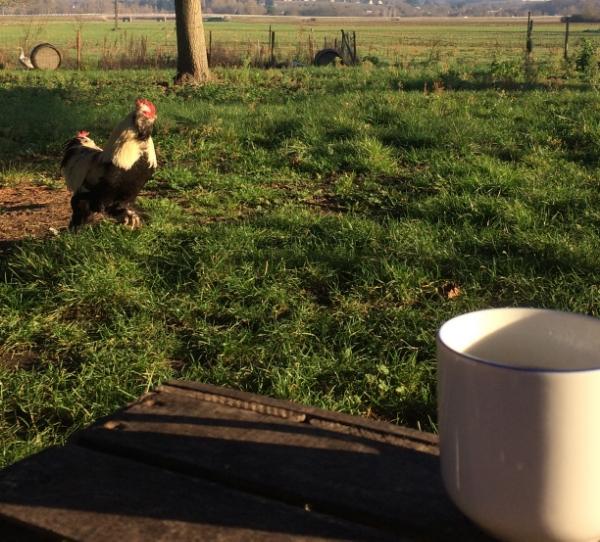 rooster coffee.jpg