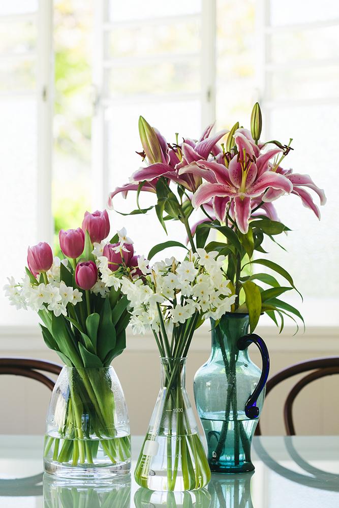 tulip_may16-4148smaller.jpg