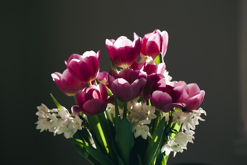 tulip_may16-4247smaller.jpg