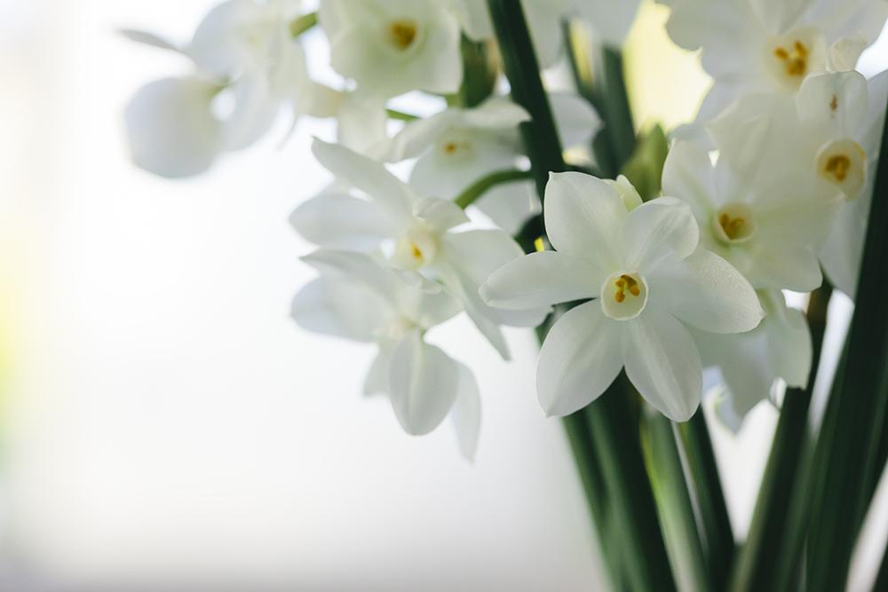 tulip_may16-4171smaller.jpg