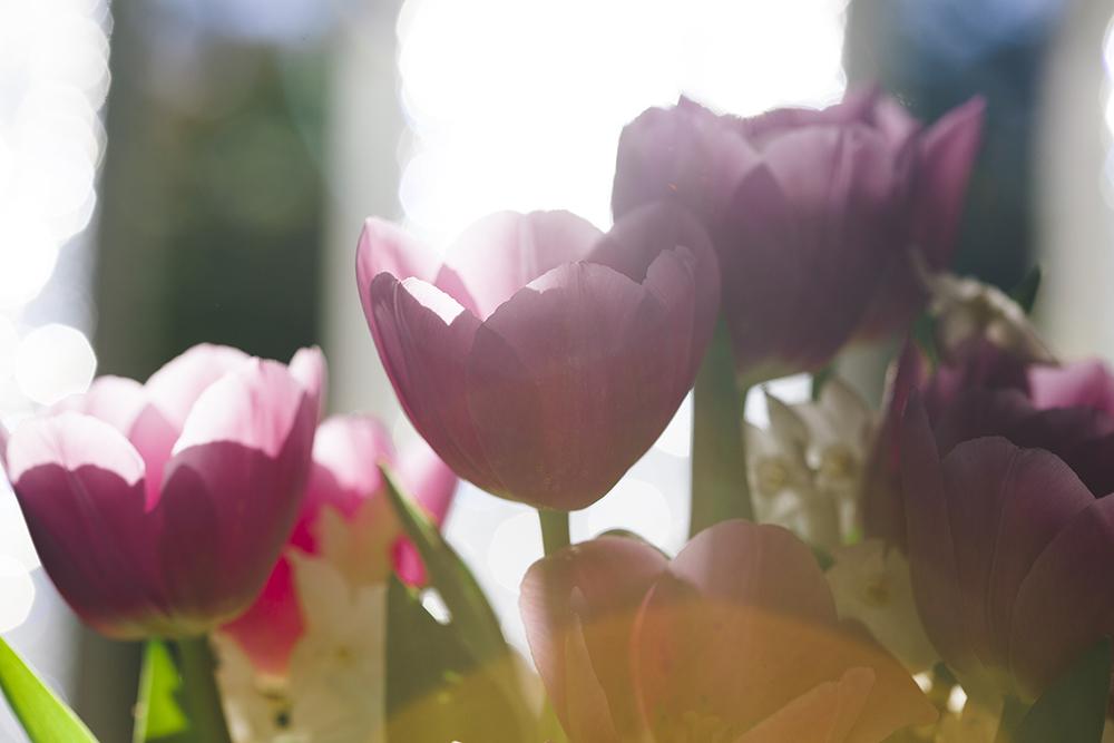 tulip_may16-4198smaller.jpg
