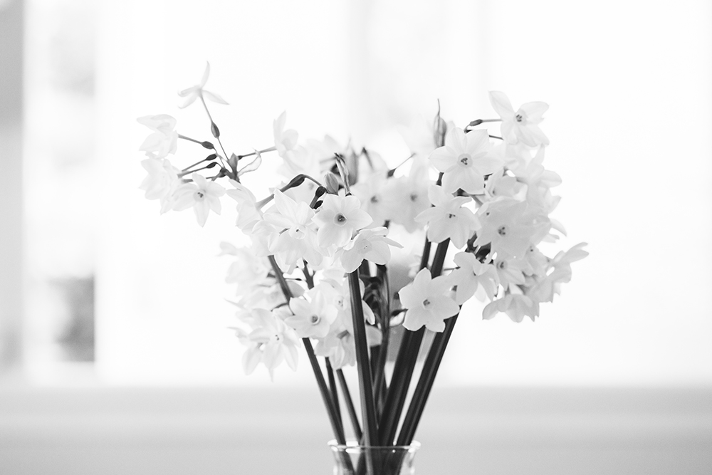 tulip_may16-4159smaller.jpg