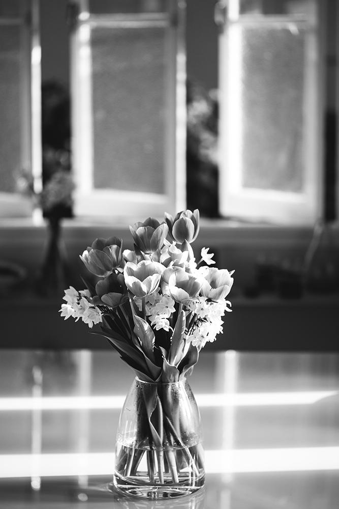 tulip_may16-4213smaller.jpg
