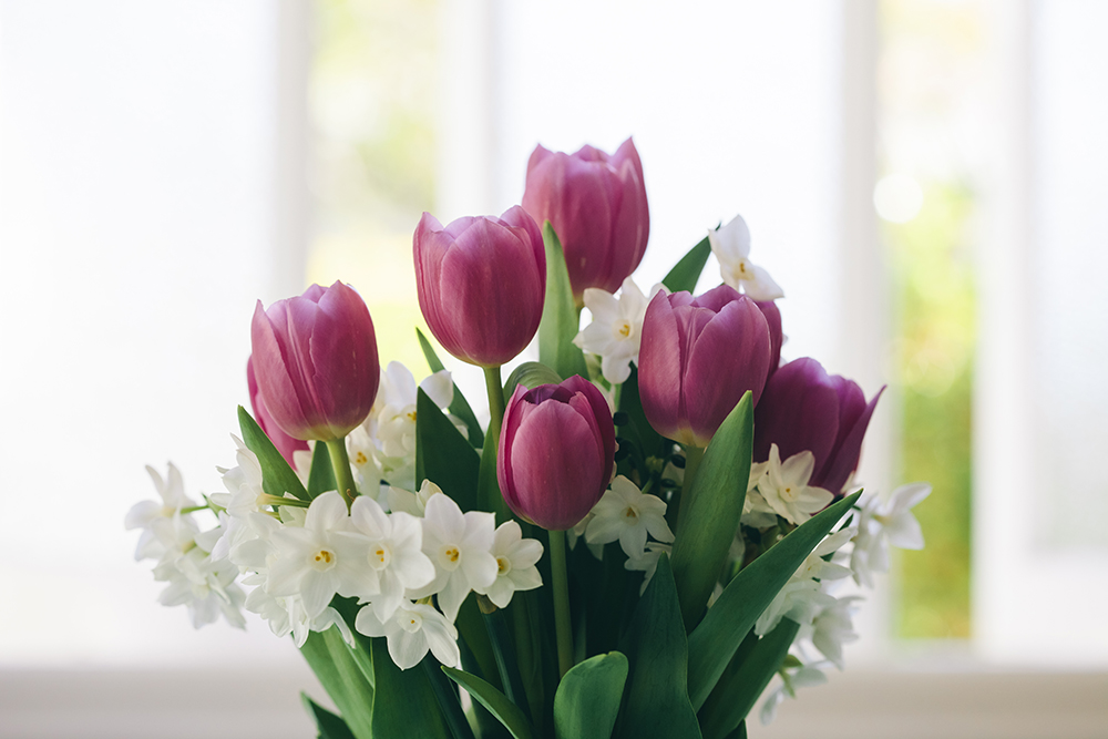 tulip_may16-4132smaller.jpg